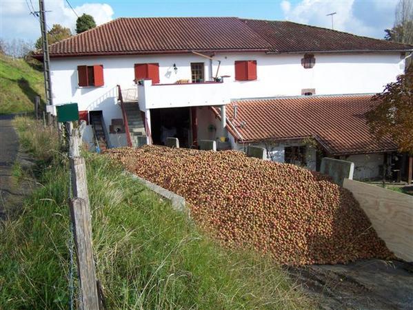 26-tonnes-de-pommes.JPG